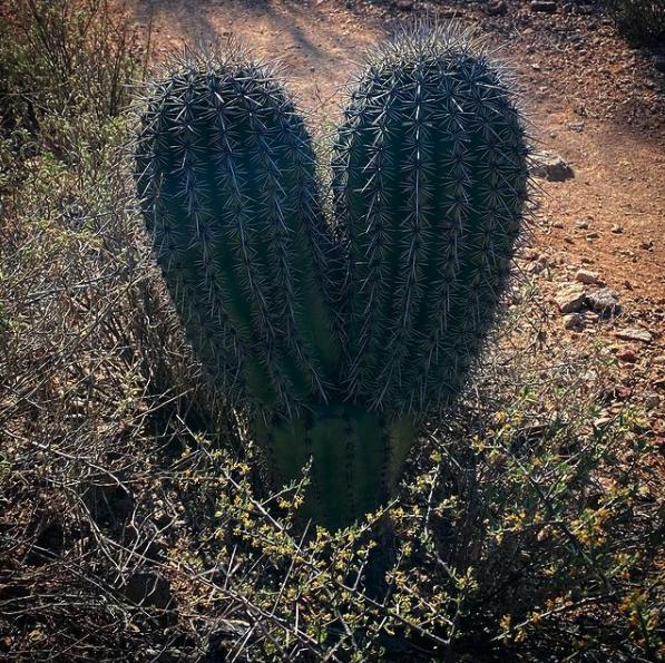 New Moon Pisces Cactus Heart