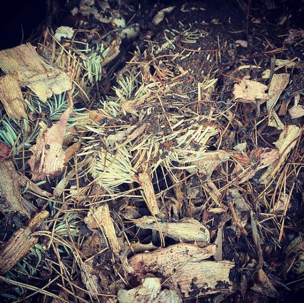 Full Moon Scorpio Compost Transformation