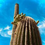 Full Moon Sagittarius Eclipse Cactus Growth Blue Sky