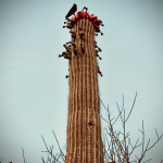Full Moon Capricorn Desert Bird Cactus