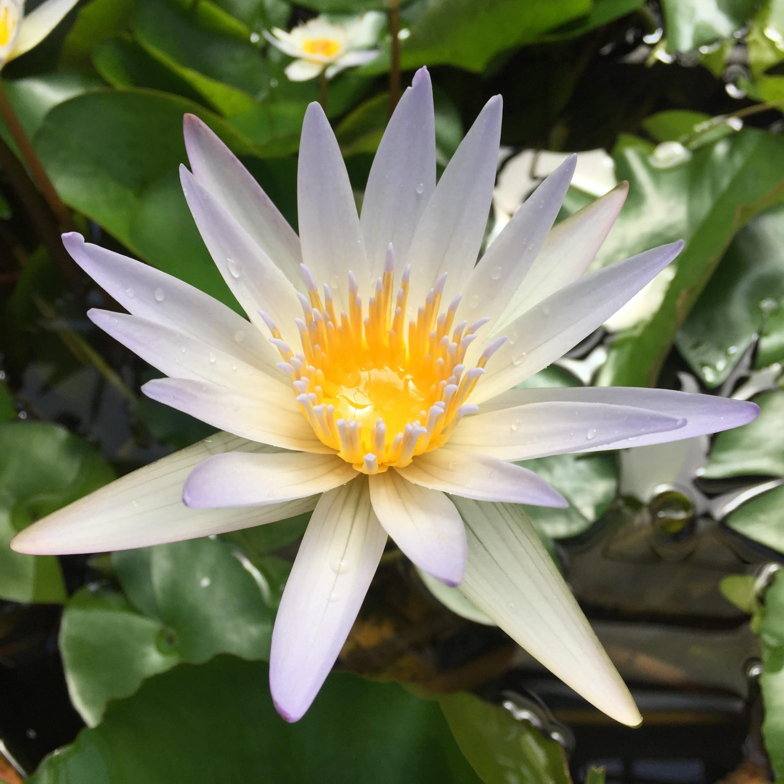 lotus new moon virgo 2021